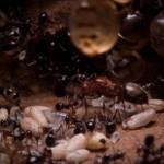 Nido de hormigas