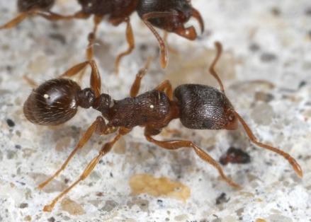 Acabar con hormigas en casa great por tanto cuando se - Remedios caseros para eliminar hormigas en casa ...