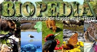 ecosistemas, biomas, naturaleza, biología