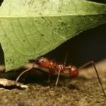 Fuerza de la hormiga